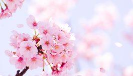 【4/6~4/30】春の食材フェア開催【うまいもん専門店】